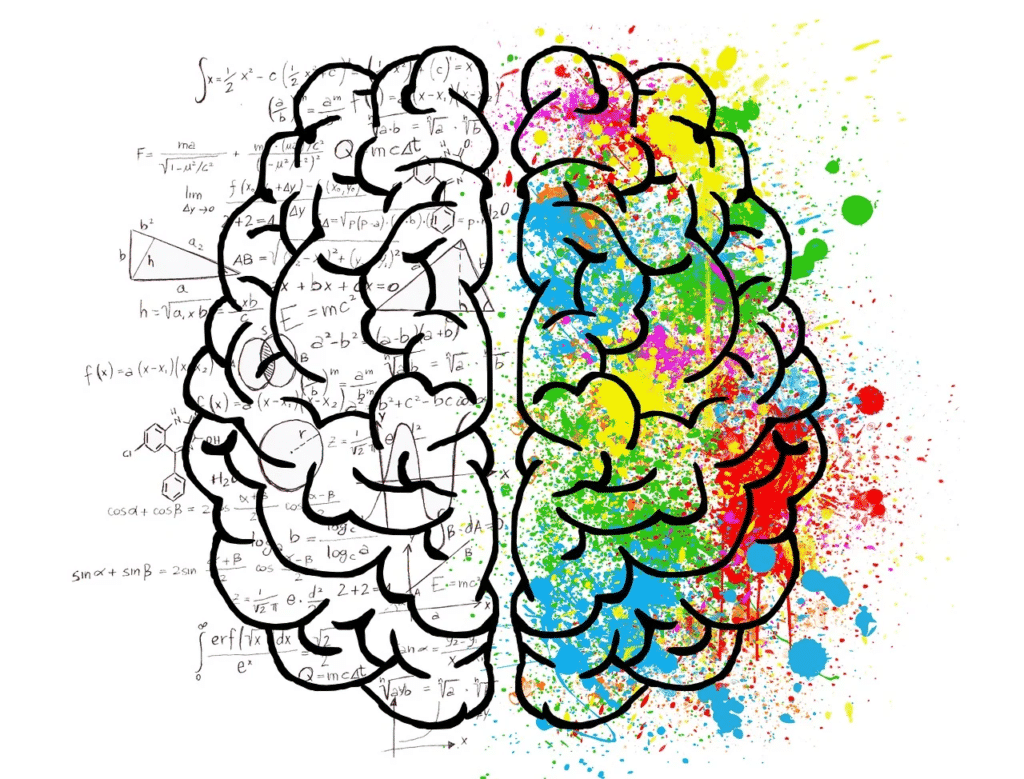 the creative and logical sides of the brain